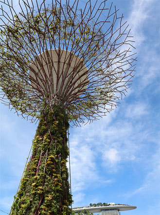 Supertrees of Singapore: beautiful vertical farms. Image courtesy of Bigstock