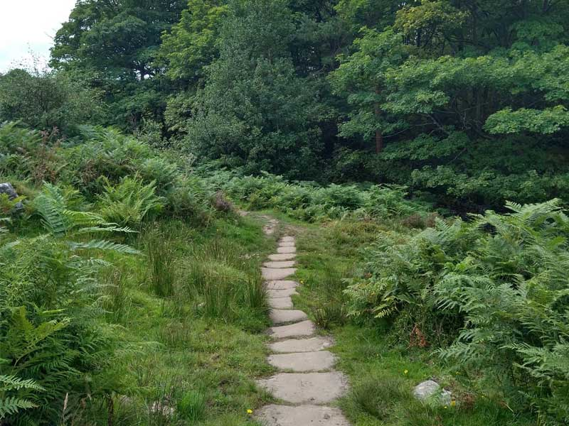 A path surrounded by ferns and trees at Longshaw Estate
